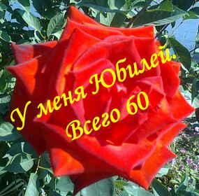 Домовой поздравления к юбилею 251